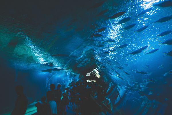 Under Aquarium Fish photo