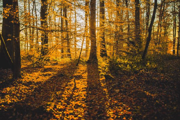 Shadow Autumn Forest photo
