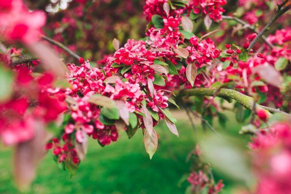 Pink Plant Garden photo