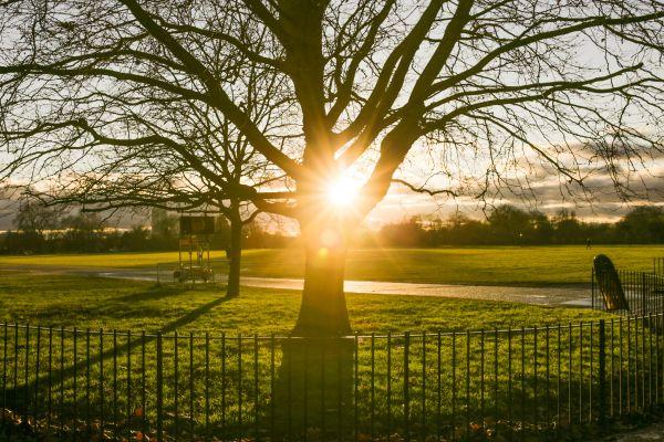 Park Fence Tree Sunset photo