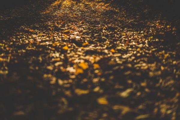 Forest Floor Leaves Autumn photo