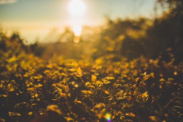 Flowers Sunset Bokeh photo