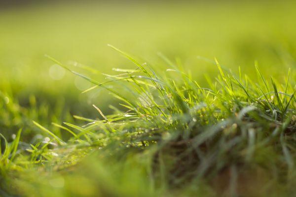 Closeup Grass Sun photo
