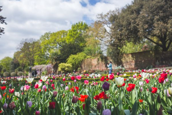 Beautiful Spring Garden photo