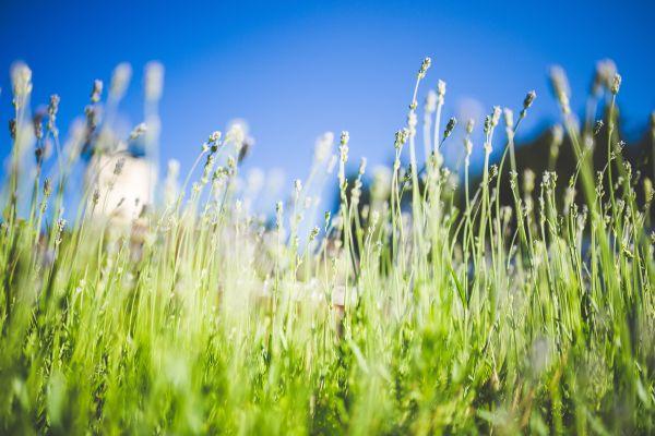Beautiful Day Plants photo