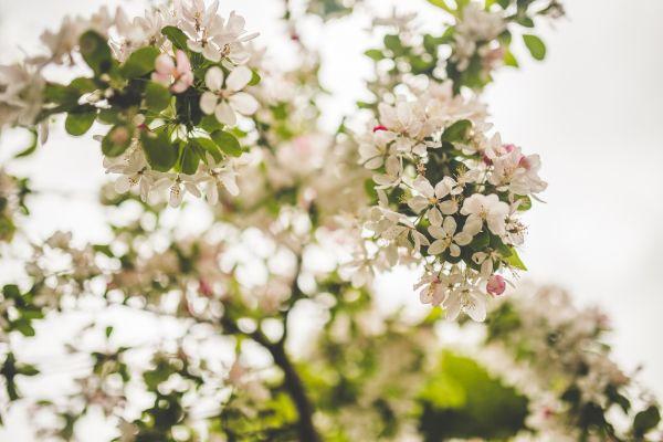 White Petal Flowers photo