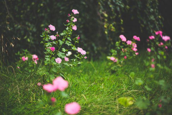 Pink Petal Flowers photo