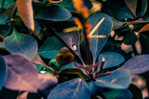 Drops photo