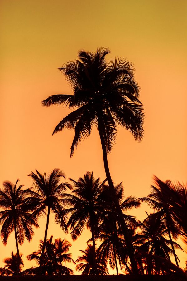 Sunset on the palms photo