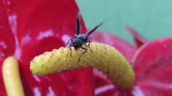 Insect  garden  wasp video