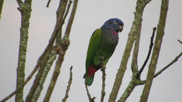 Nature  ave  parrot video