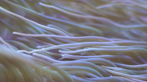 Underwater  sea grass  aquarium video