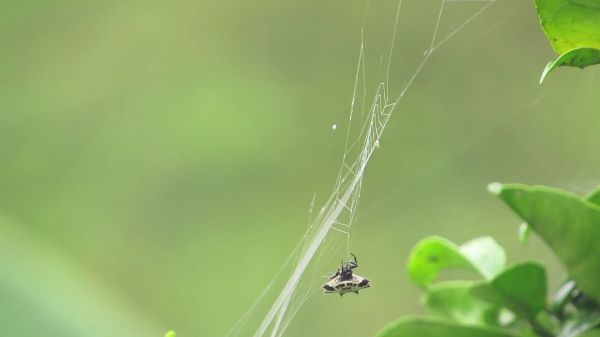Spider  nature  insect video