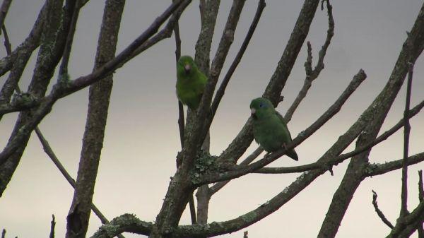 Birds  parrots  parakeets video