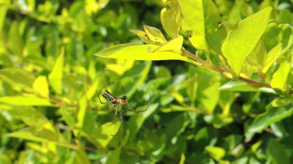 Insect  arachnid  spider garden video