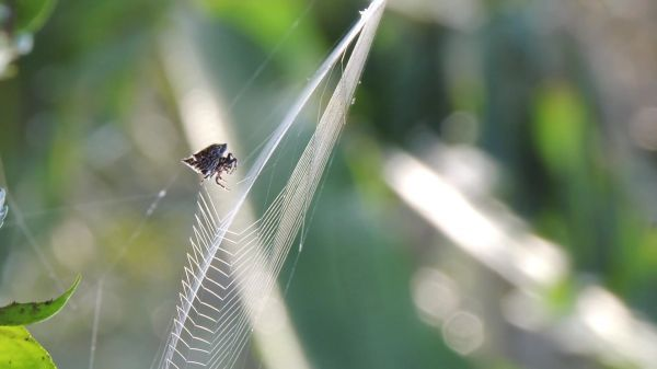 Spider weaver  insect  web video