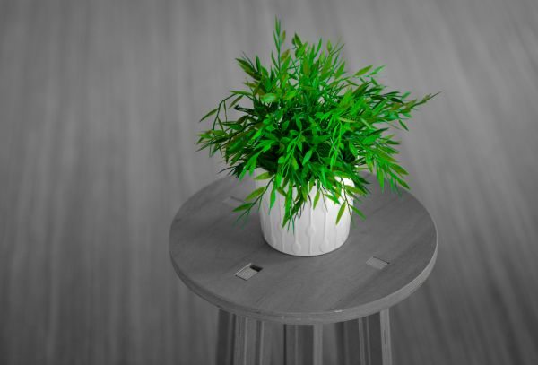 Green plant photo