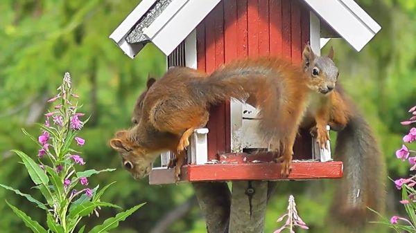 Squirrel  forest animals  bird video
