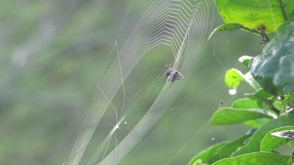 Nature  insect  spider video