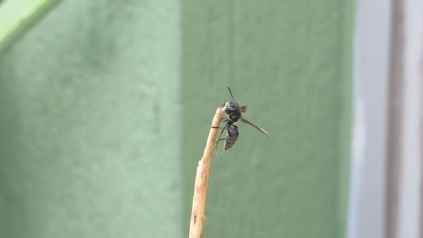 Insect  nature  wasp video