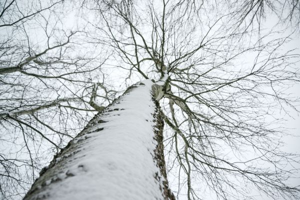 Tree trunk in the snow photo