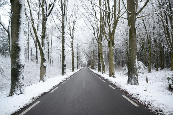Road in the forest during winter photo