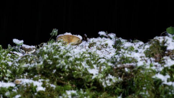 Snow  snowfall  mushroom video