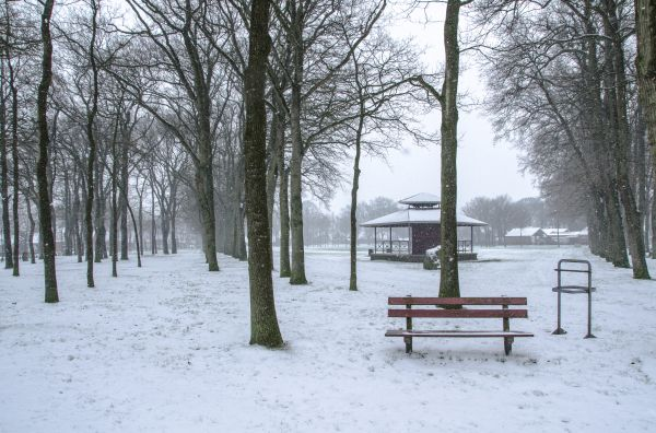 Winter in The Netherlands photo
