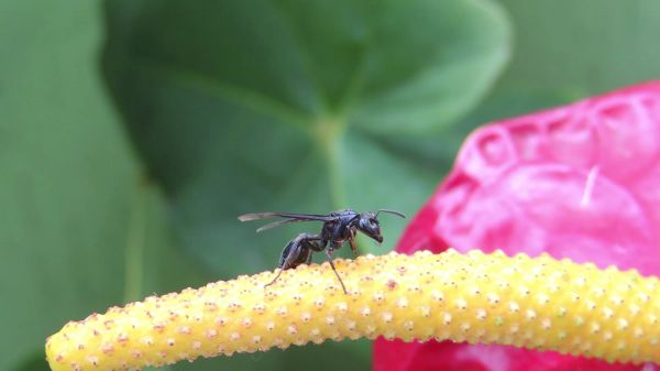 Nature  insect  wasp video