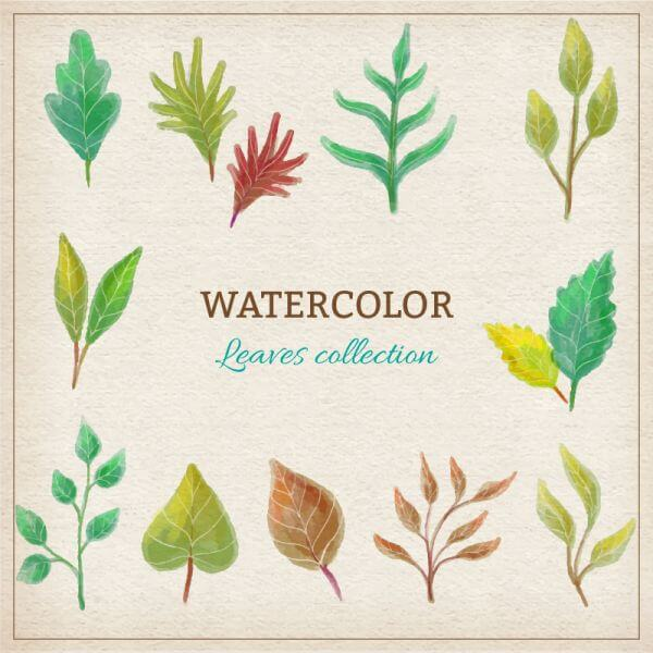 Watercolor leaves collection vector